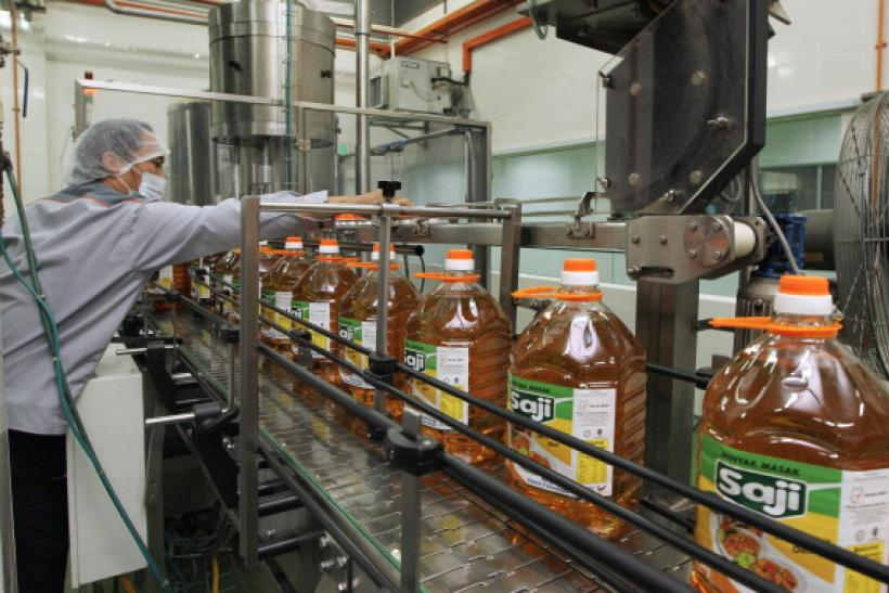 How to invest in oil palm production
