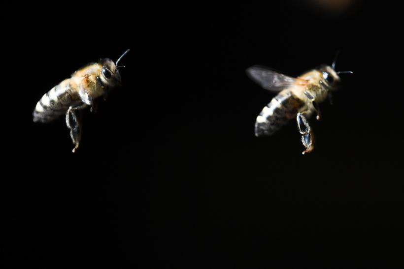 arizona hiker killed by bees