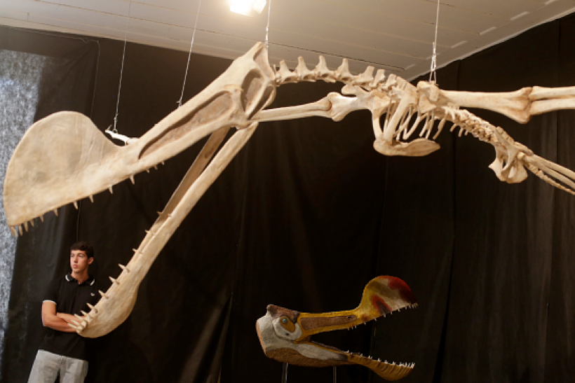 Paleontologist have discovered a new species of pterosaur in Patagonia.