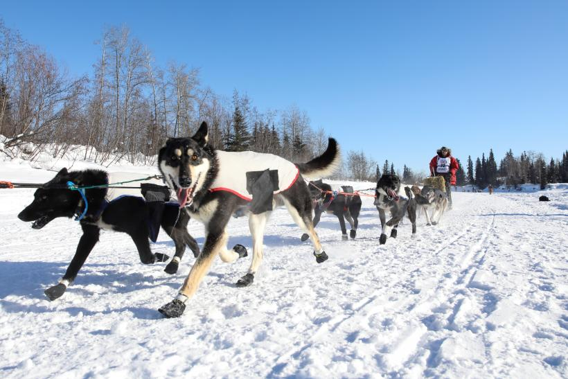 iditarod debate Iditarod lesson for kids  the iditarod is a commemorative dogsled race that takes place every winter and runs from  debate lesson plan 9th grade writing.