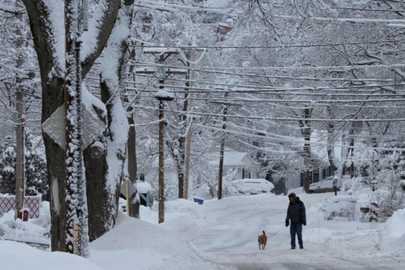 How much snow did Winter Storm Stella bring to the Northeast?