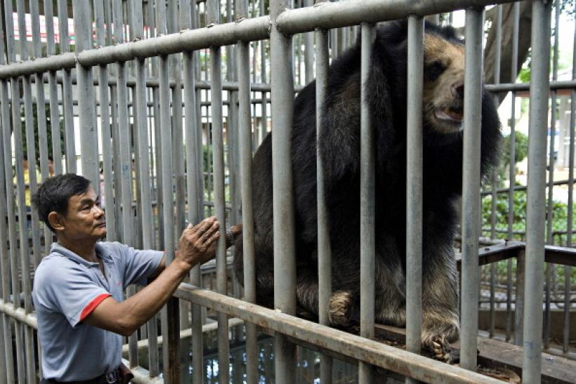 Bear in an enclosure