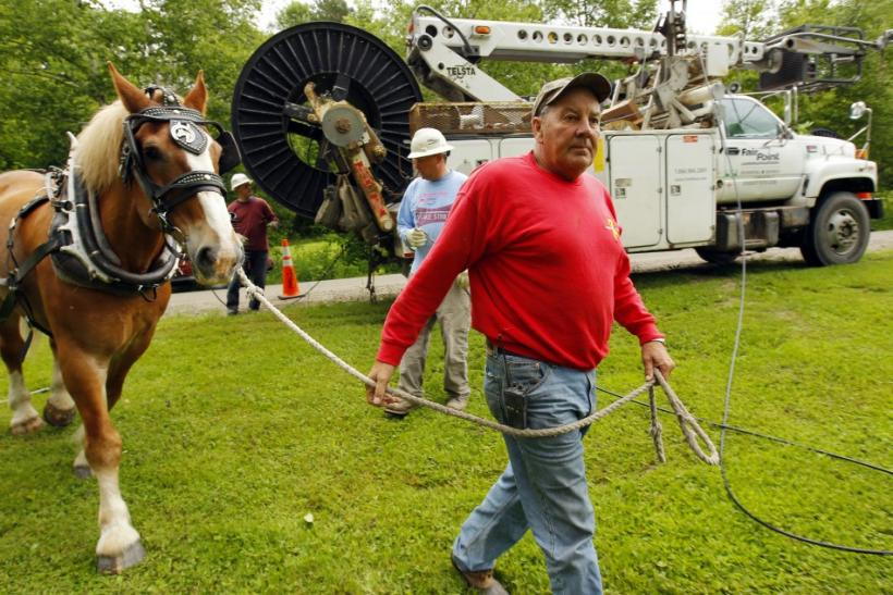 Desmarais leads his Belgian draft horse Fred into position to pull fiber optic cables from the roll on the back of a the truck onto utility poles in East Burke
