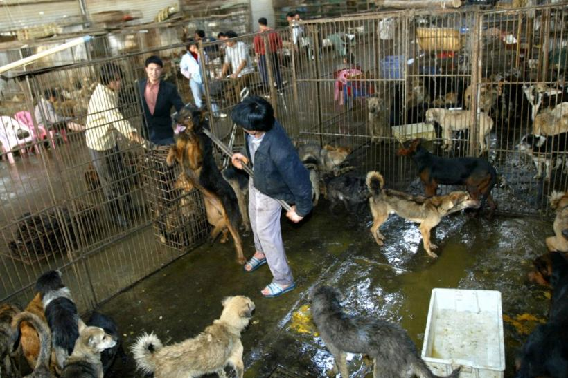CHINESE VENDORS PREPARE TO WEIGH DOGS TO BE SOLD AS FOOD AT AN EXOTIC GAME MARKET IN GUANGZHOU.