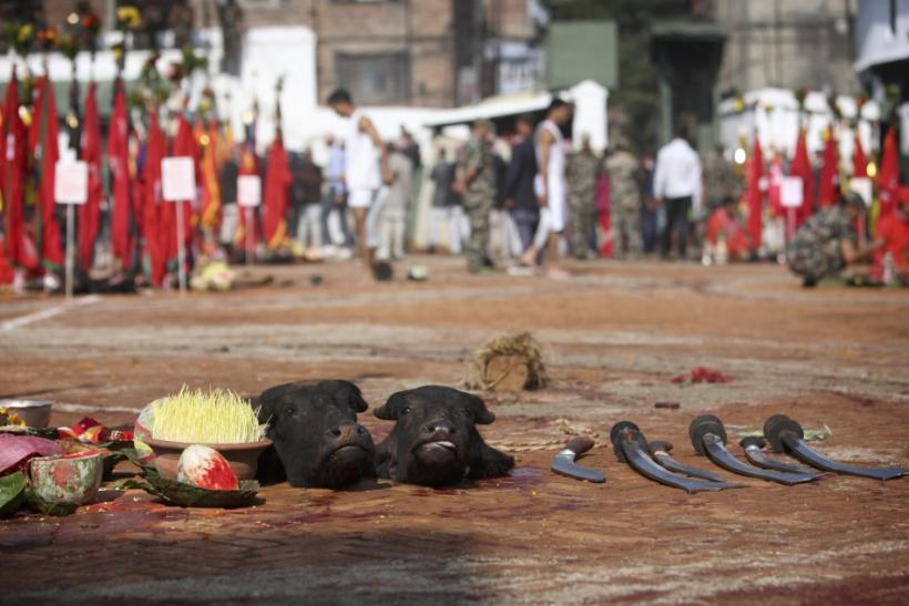 Sliced heads of water buffalos are seen lying on the ground after being sacrificed during the Dasain festival in Kathmandu