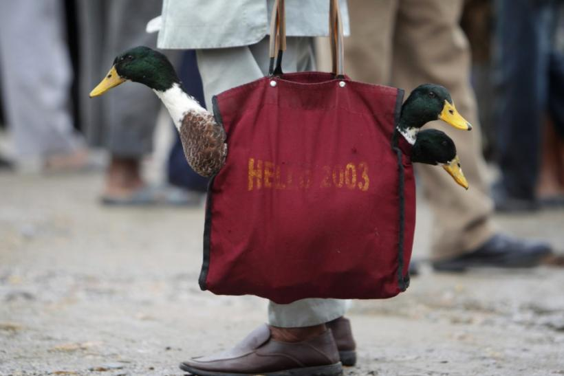 A man carries in a shopping bag ducks to be sacrificed at a livestock market in Kathmandu