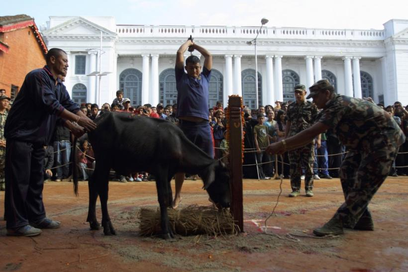 A Hindu man slaughters a water buffalo at a sacrificial ceremony during the Dasain festival in Kathmandu