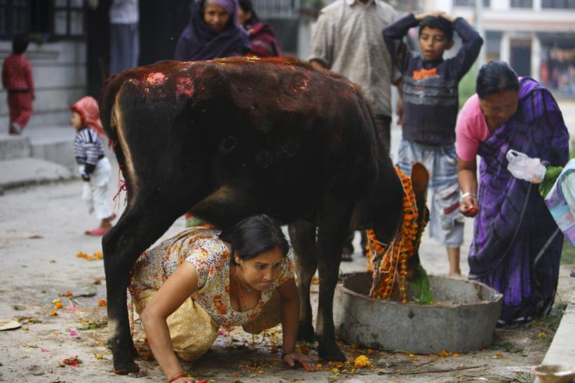 an analysis of how sacred a cow is in the religion of hinduism Why is the cow sacred in hinduism i need a brief became a part of the culture taking form in their religion today every part of the cow holds.