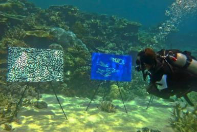A diver plunges 4 metres to get a closer look at the underwater art