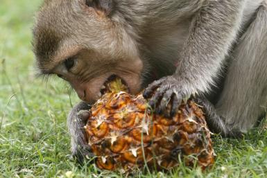 monkey-low-calorie-diet