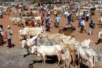 Worst drought of Africa in 60 years