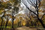 New York Fall Foliage