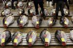 Tuna Stock In Pacific Dangerously Low