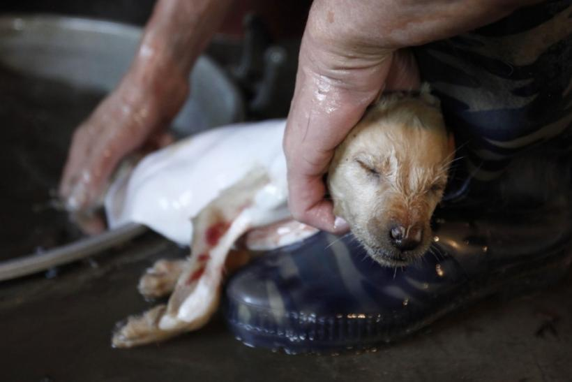 10. Which countries eat dog meat?
