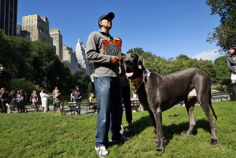 Guinness World Record's Tallest Living Dog, Giant George
