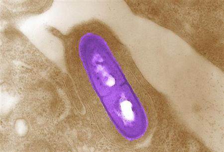 Listeria Monocytogenes Bacteria-U.S. Centers for Disease Control and Prevention