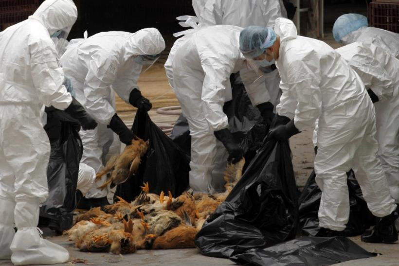 H5N1 Containment