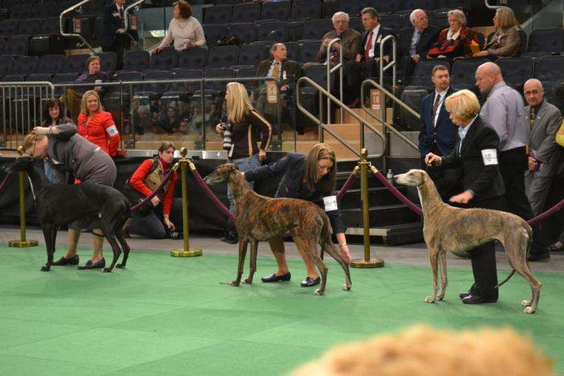 Westminster Dog Show Day 1