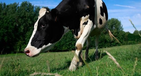 New Zealand Court Blocks Sale of Dairy Farms to Chinese Investors