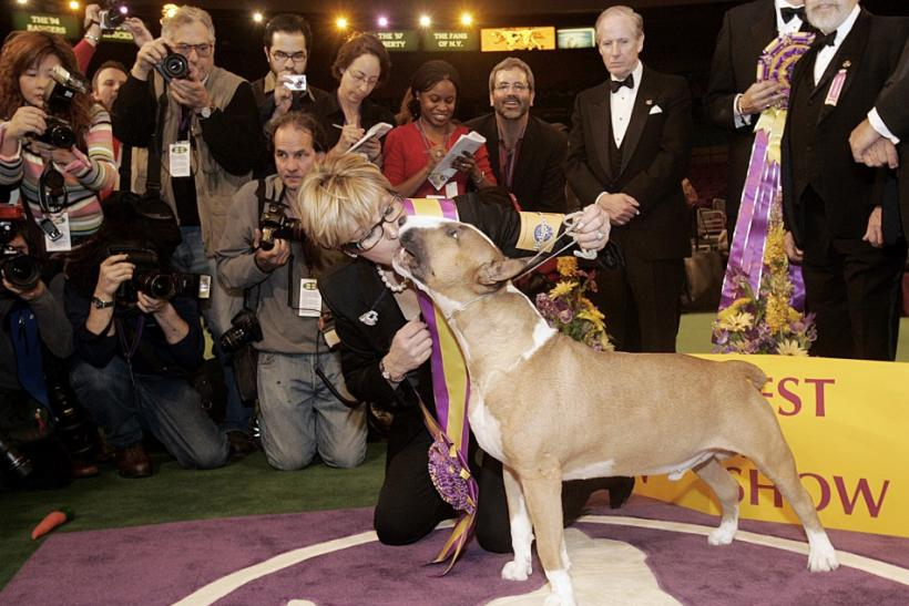 2006 Best in Show: Colored Bull Terrier