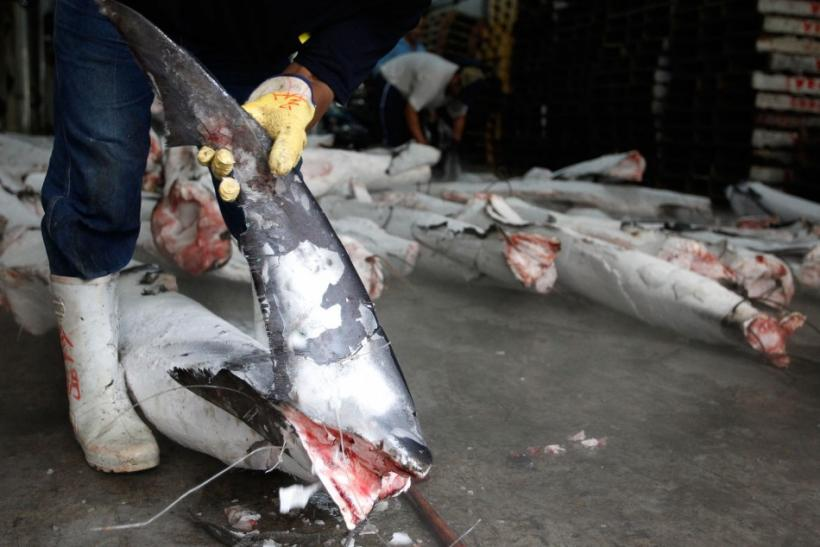 Japanese Fishing Vessel Fined $125000 for Violation of Shark Fishing Law