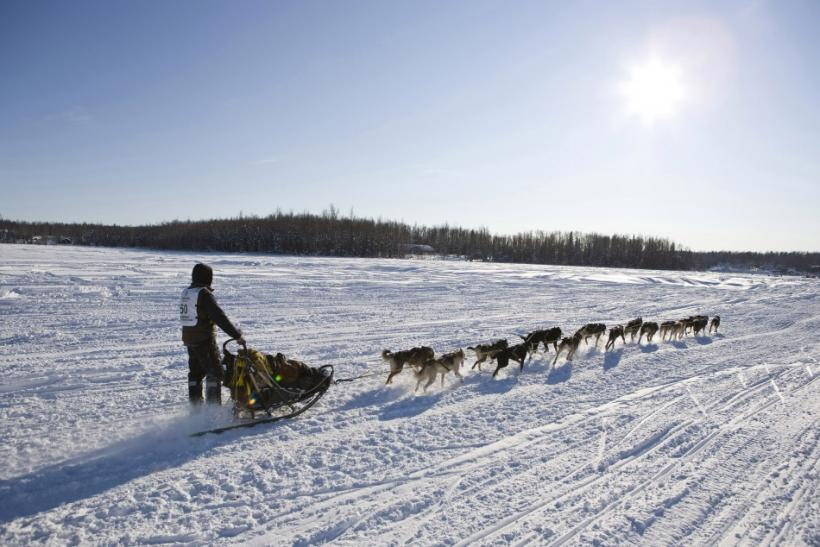 Sass of Fairbanks, Alaska, takes his team towards Nome at the official re-start of the 40th Iditarod Trail Sled Dog Race in Willow