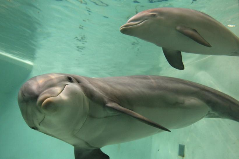 Patna to Become Asia's First Dolphin Research Centre