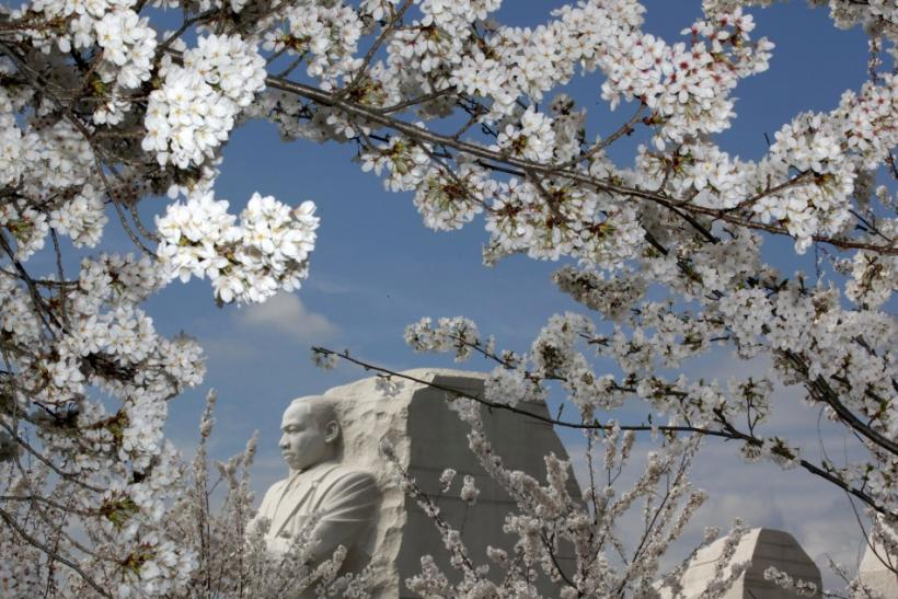 Cherry Blossom: Washington Celebrates 100 Years of Gift of Trees from Japan