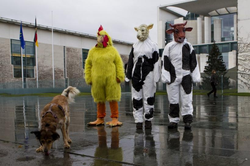 Animal Rights Protests In 2012