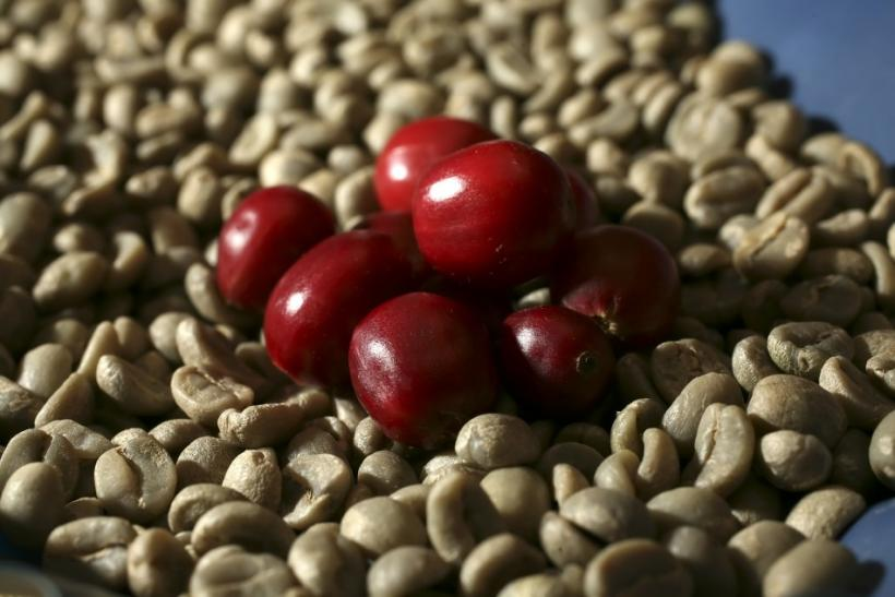 Unroasted Coffee Extract May Help You Lose Weight