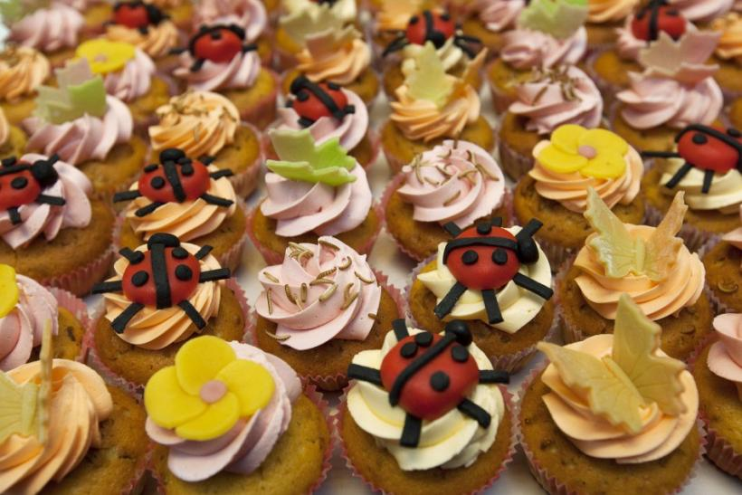 Cupcakes Made From Insects