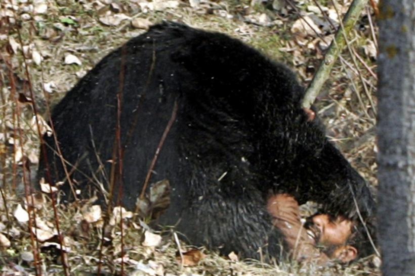 Deadly Bear Mauls Alaskan Teens, Plus 20 Horrific Animal Attacks (Photos)