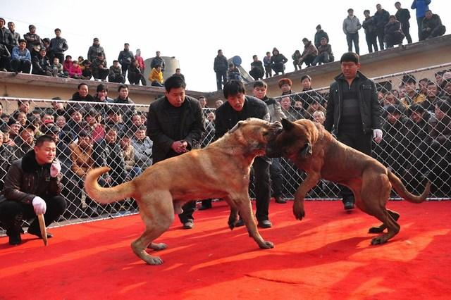 how to stop two male dogs fighting each other