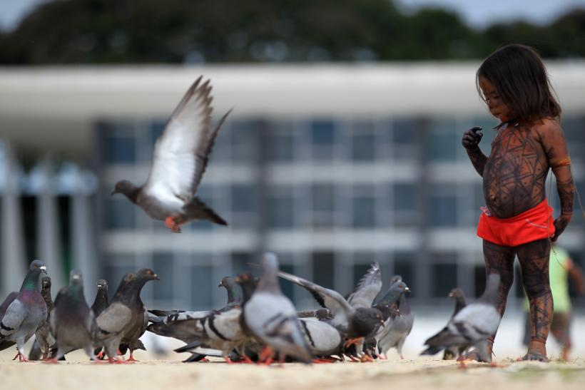 Climate Change: Are Birds At Risk?