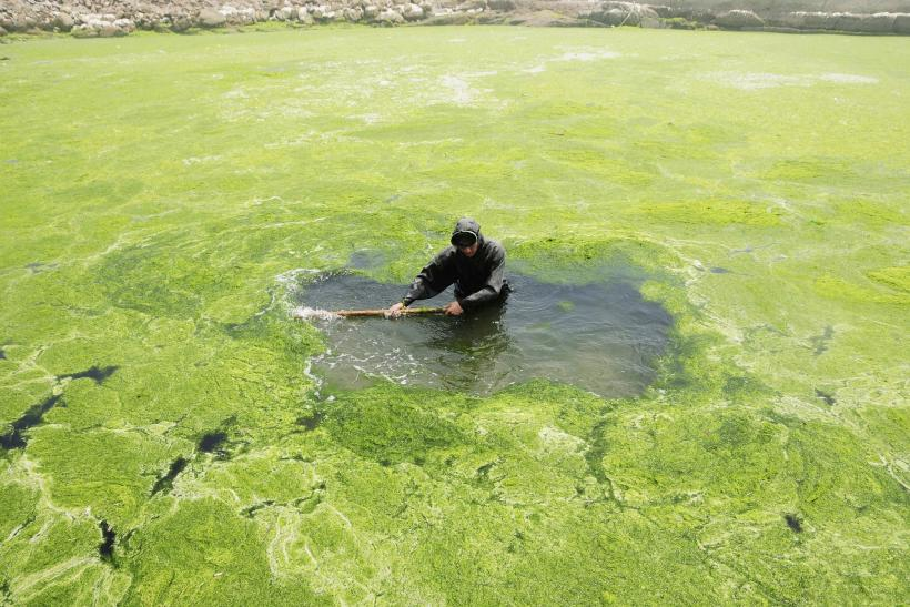 Green Algae In China