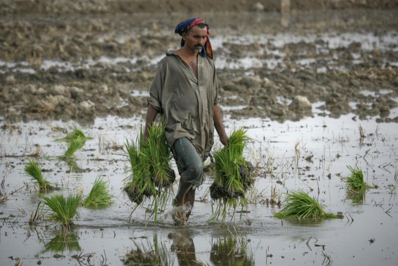 Farmer in Larkana, Pakistan