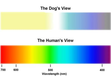 dog-vision-color-spectrum-compared-to-man2