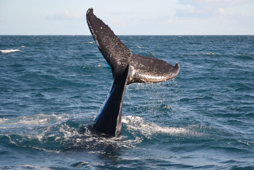 Whale tail photo