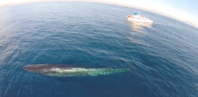 Drone Whale Watching