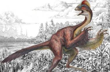 'Chicken From Hell' 500 Pound Dinosaur