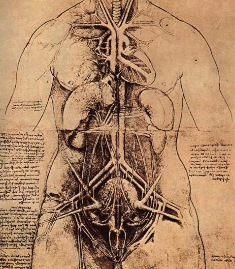 """Drawing of A Woman's Torso,"" Leonardo Da Vinci"