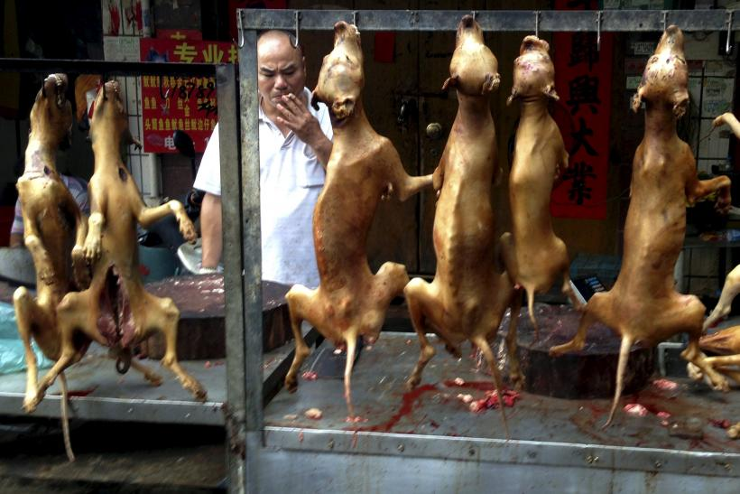 CHINA-DOG-MEAT