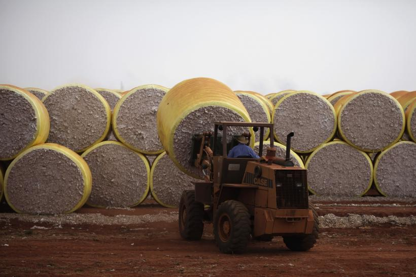 US, Brazil To Resolve Trade Dispute Over Cotton Subsidies