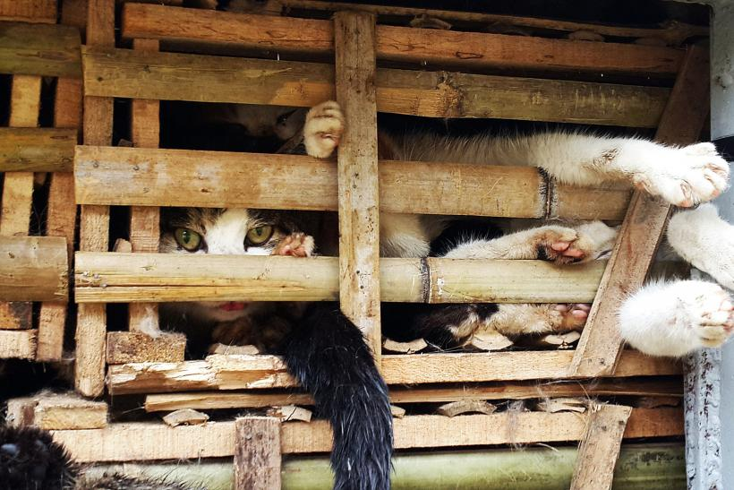 Vietnam Police Seize 3 Tons Of Living Cats Bound For Restaurants