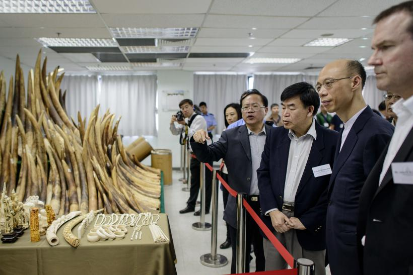 China Imposes Year-Long Ban On Ivory Imports To Reduce Demand In The Country